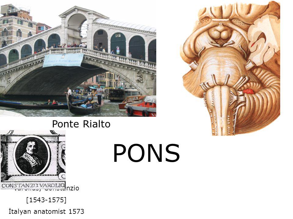 PONS Ponte Rialto Varolius, Constanzio [1543-1575]